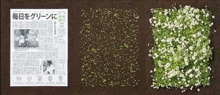seconde-vie-mainichi-shimbun-journal-japonais-fleurs-0