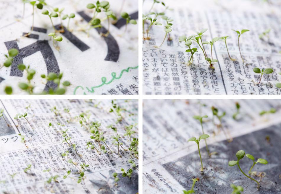 seconde-vie-mainichi-shimbun-journal-japonais-fleurs-1