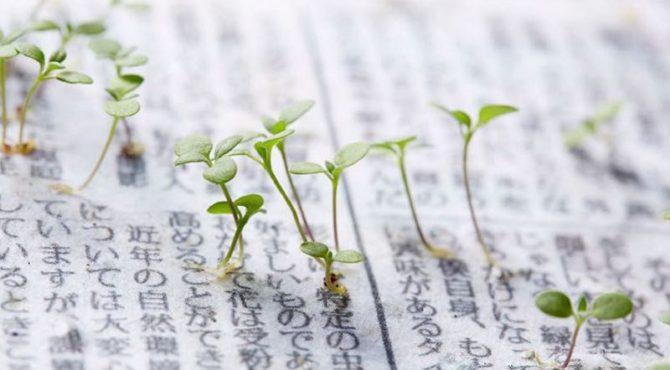 seconde-vie-mainichi-shimbun-journal-japonais-fleurs