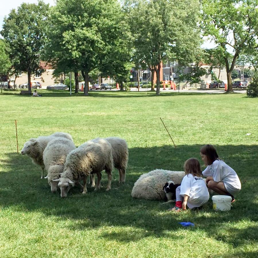 bergerie-biquette-montreal-agriculture-urbaine-projet-pedagogique-ludique-participatif