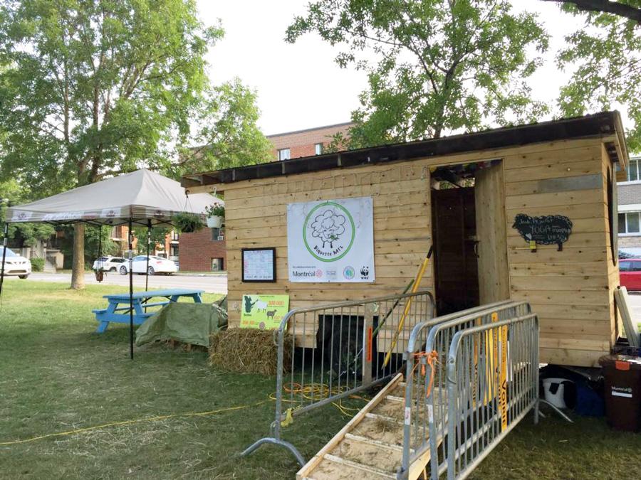 bergerie-biquette-montreal-agriculture-urbaine-projet-pedagogique-ludique-participatif-5